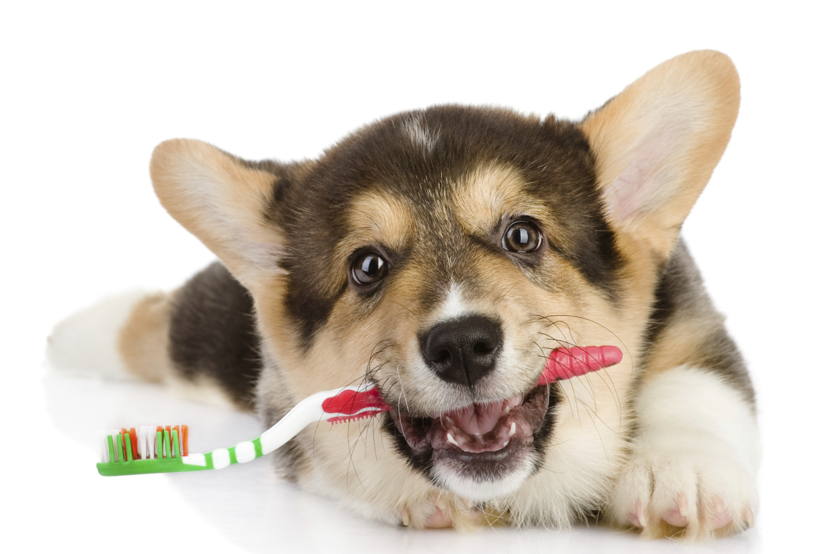 Top Tips for Dental Care for your Pets from a Veterinary Dental Enthusiast